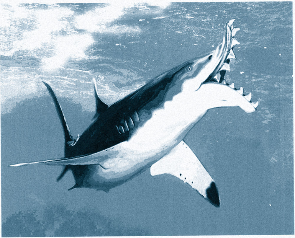 Wright State University Magazine – Shark Tale « Wright State University