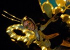 Tiffany Fridley, pictured here in a butterfly costume performing in the beloved SpectroMagic parade at Walt Disney World.