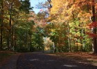 Photo of wooded drive