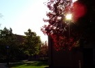 Photo of sunset's rays peeking through a tree on campus