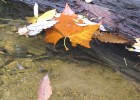 Photo of leaves in water next to a log