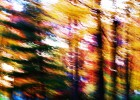 Photo of blurred forrest