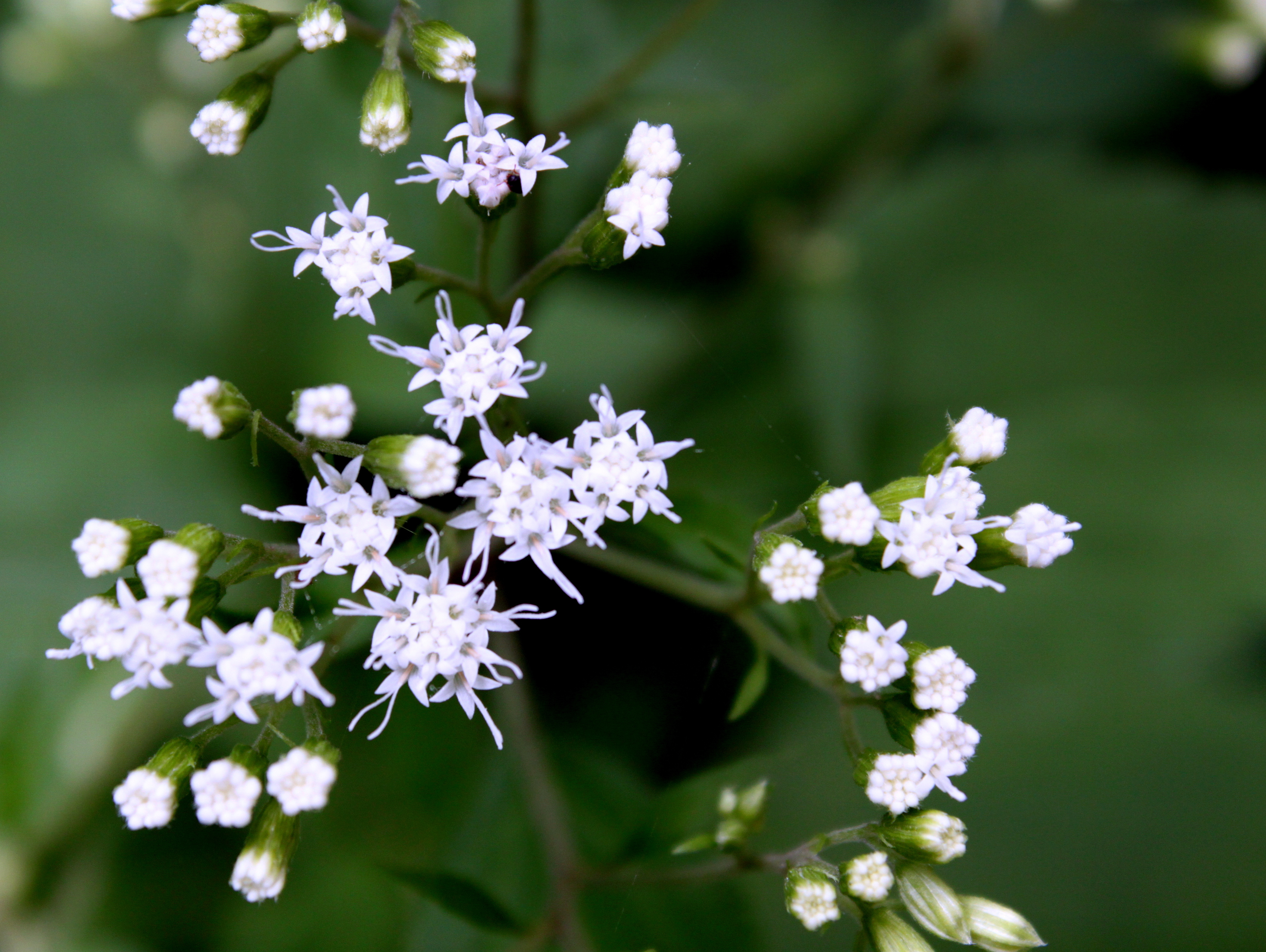 "Runner up: Tina Vasilescu–""White Flowers"""