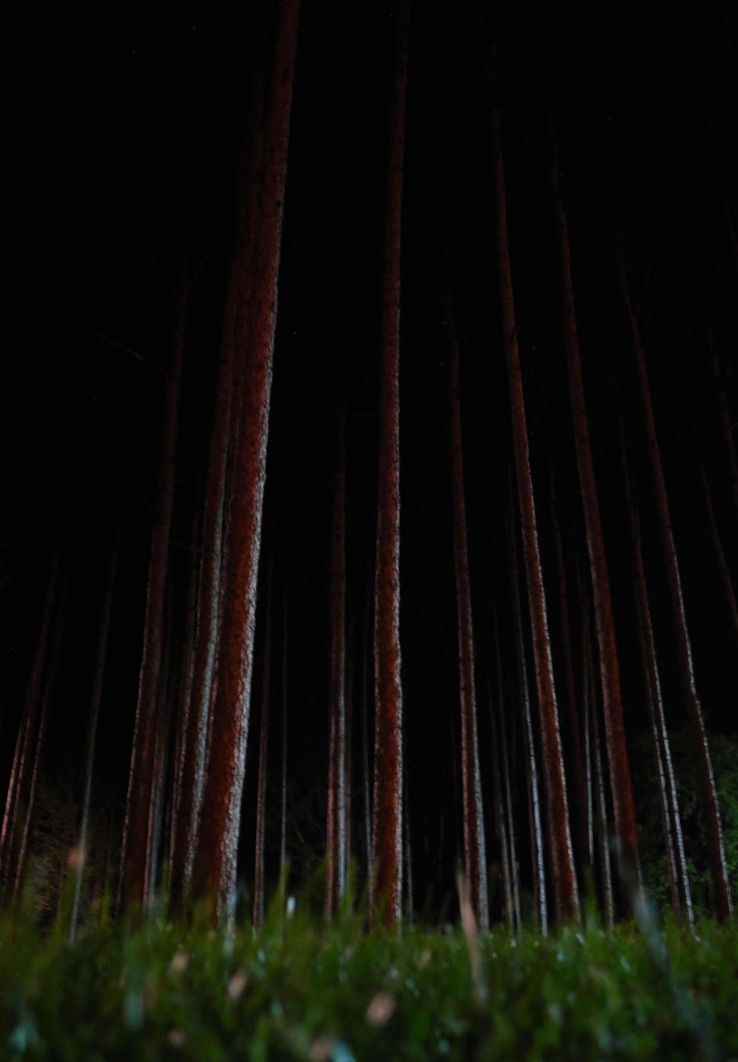 "Honorable Mention: Dramatic Scene–Jean Goettemoeller–""Pines at Night"""