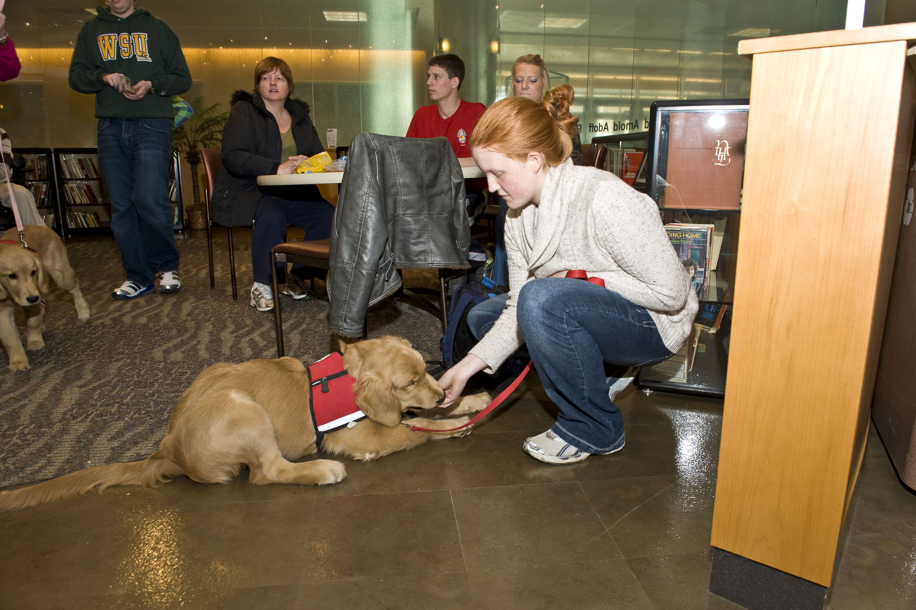 Wright State Service Dog program growing with puppy-fueled exuberance