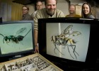 Photo of biology professor John Stireman flanked by students in his lab: (left to right) Zach Burington, Dan Davis, Stireman, Karen Pedersen and Tiffany Brown.
