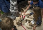 Service dogs from 4 Paws for Ability aren't just popular with college students on campus. They were a big hit with the kids too.
