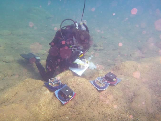 Biology professor Yvonne Vadeboncoeur underwater