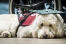 Service dog waiting