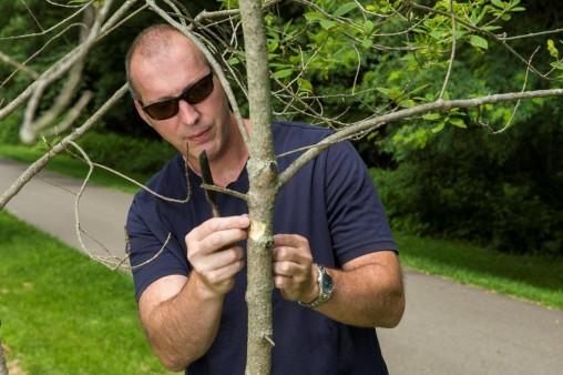 Don Cipollini examining a white fringetree