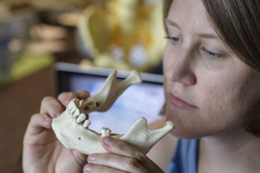 Wright State anthropologist Amelia Hubbard specializes in the study of past life ways through teeth. (Photos by Will Jones)