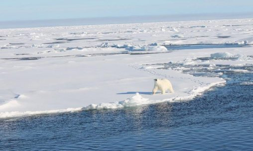 Polar bear seen from aboard the Healy. (Contributed photo)