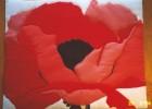 Georgia O'Keeffe's Red Poppy in Barker code.