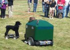 Photo of the lawn mower near a radio-controlled poodle